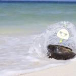 【お知らせ】セブ島留学ネクシード年末年始休業について