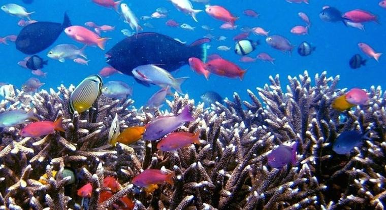 tropical-fish-256563_640