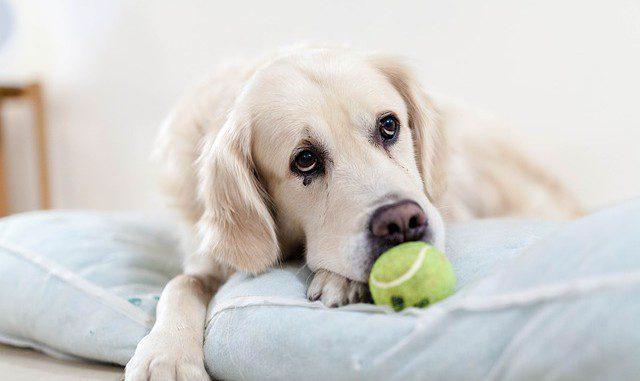 dog-2618021_640