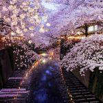 日本の文化を英語で!「お花見」の英語フレーズ集