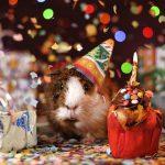 「おめでとう!」友人をお祝いするときの英語フレーズ集